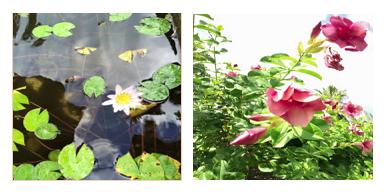 Tortola Botanical Gardens